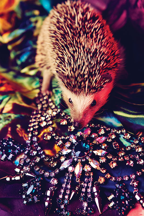 Leigh-Keily-Fashion-Pets-PHOENIX-LR